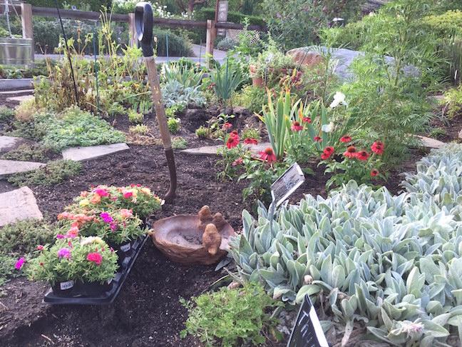 New plantings await return of landscape artist Trish Kydd