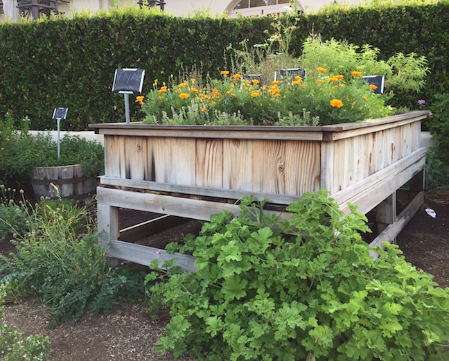 Raised beds contain variety of herbs and flowers